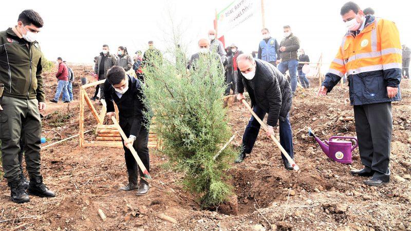 Dursunbey Çınar mahallesi bölgesinde oluşturulan ağaçlandırma  sahasında yüzlerce fidan ile toprakla buluştu.